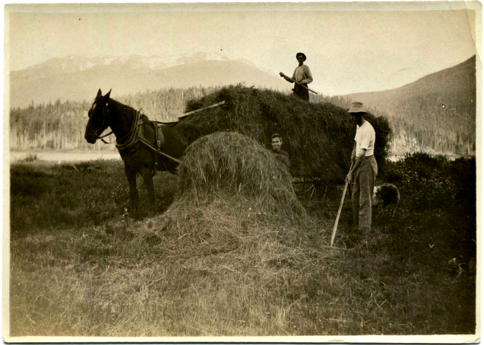 Horse and wagon rigged for haying. Sewall Tapley is on top of hay in the wagon; Alex Philip and an unidentified helper are pitching hay. Courtesy Whistler Museum.