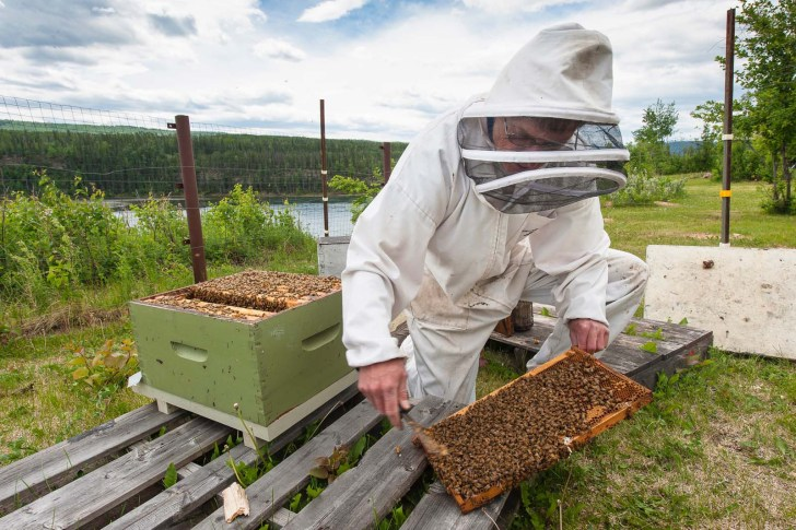 Beekeeper Guy Armitage. Much of his Hudson's Hope Honey farmland and bee habitat will disappear under the Site C reservoir.rmland and bee habitat will disappear under the Site C reservoir.87