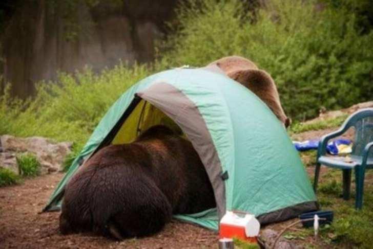 Bear in tent failure