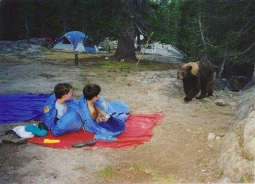 Bear near camping kids
