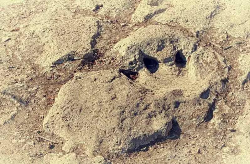 dinosaur valley footprint by randall chancellor