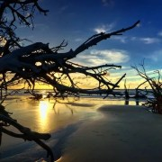 beach at sunset with driftwood