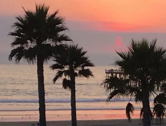 palm trees at beach sunset