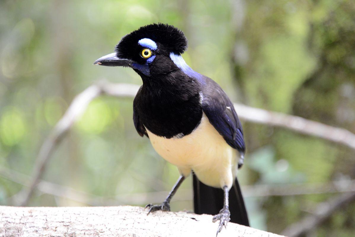 Image result for BIRDS  IGUAZU FALLS GREEN TRAIL