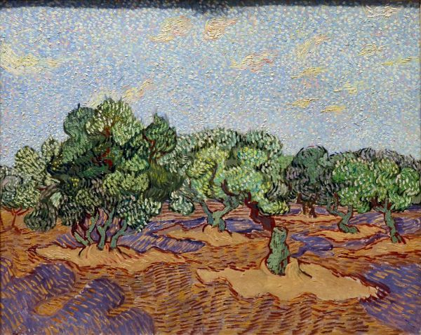 Olive Trees - Vincent Van Gogh 1889 York