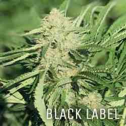 Black-Label-Photo