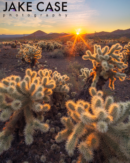 Sonoran Desert Sunrise Sunset Landscape Cactus