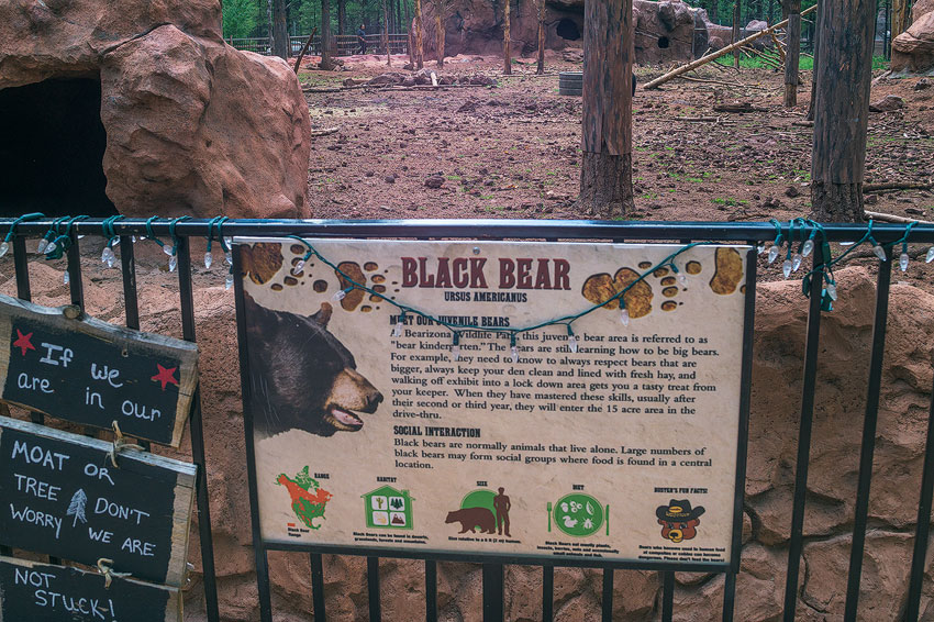 black bear information