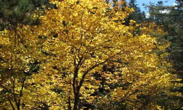 Autumn Color Tours
