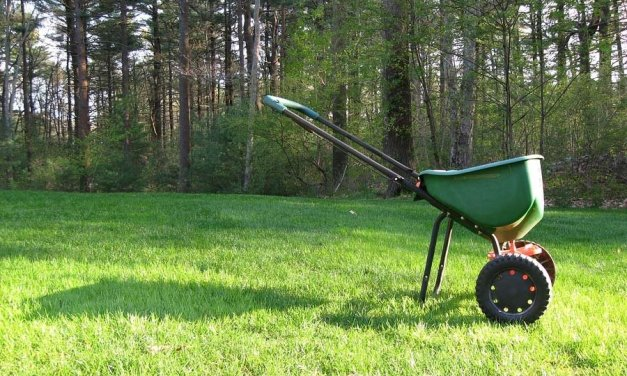 """""""Maintaining Green"""" Fall Landscape Projects"""