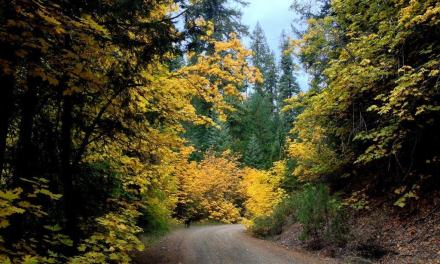 Fall Color in the Mountains of Nor Cal