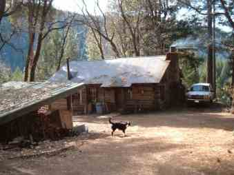 The cabin and the dogs today