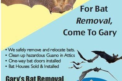 Gary's Bat Removal (530) 258-2811 Chester Ca Pest Control, Live Bat Removal Plumas County, Bat Control Lassen County WebDirecting.Biz