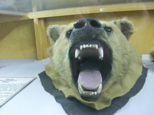 bear at taylorsville museum
