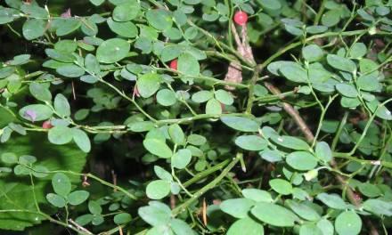 Survival Techniques To Remember Plants, Plants, Plants