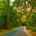 Take The Scenic Route Bicycling Bidwell Park Chico CA