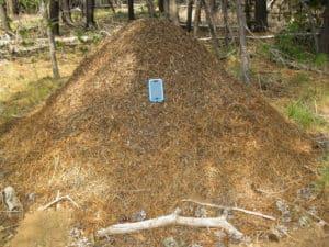 Red Mound Ant Nest2