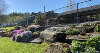 Rock Garden near pool