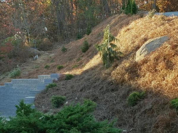 landscaping & curb appeal - mountain