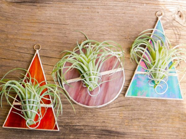 Stained glass air plant holders on wooden background