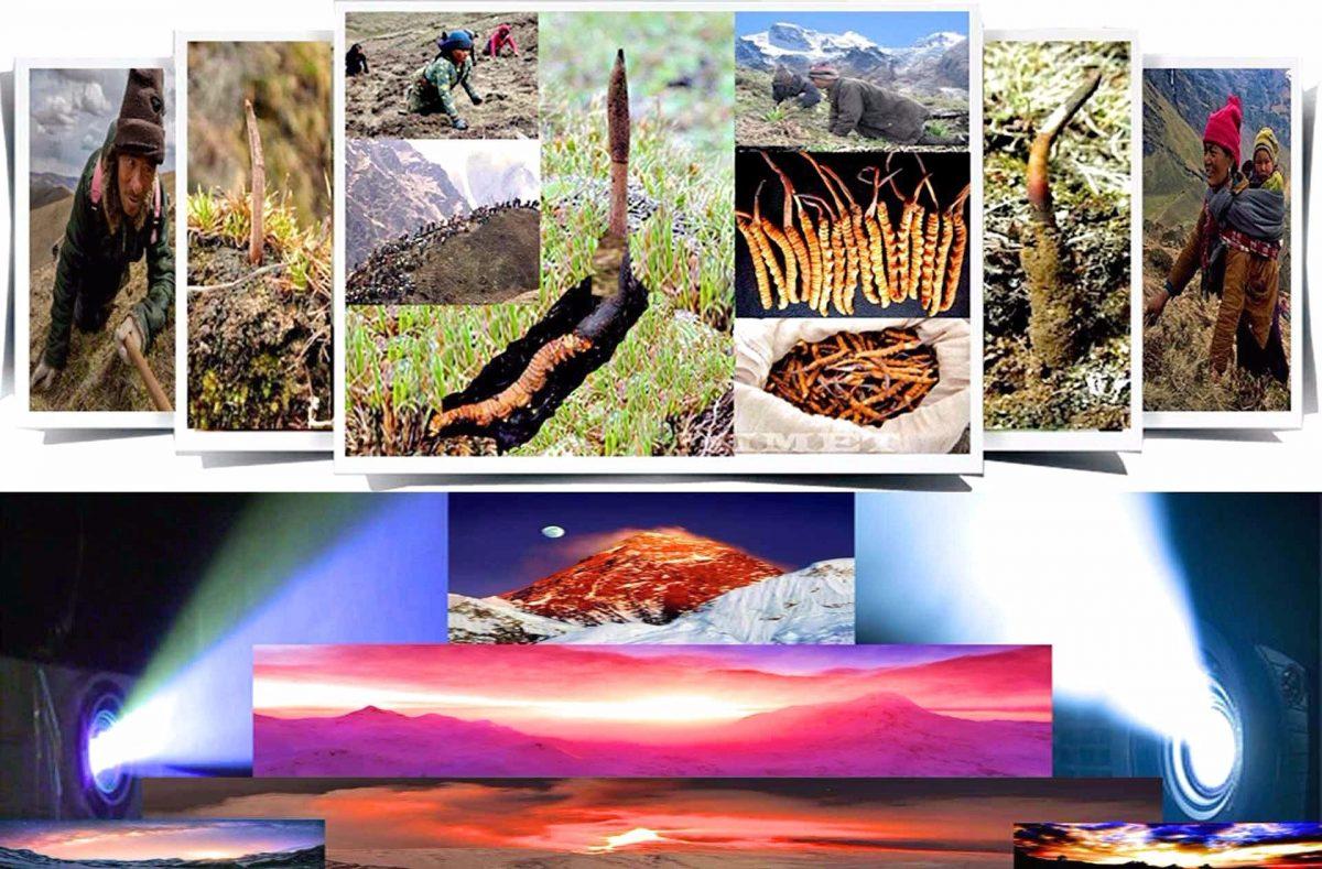 Himalayas Documentary Show