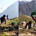 During Himalaya Herb Yarsha search in Nepal mountains