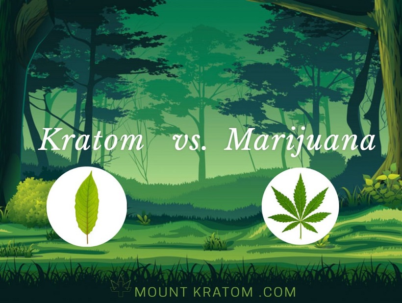 kratom vs marijuana