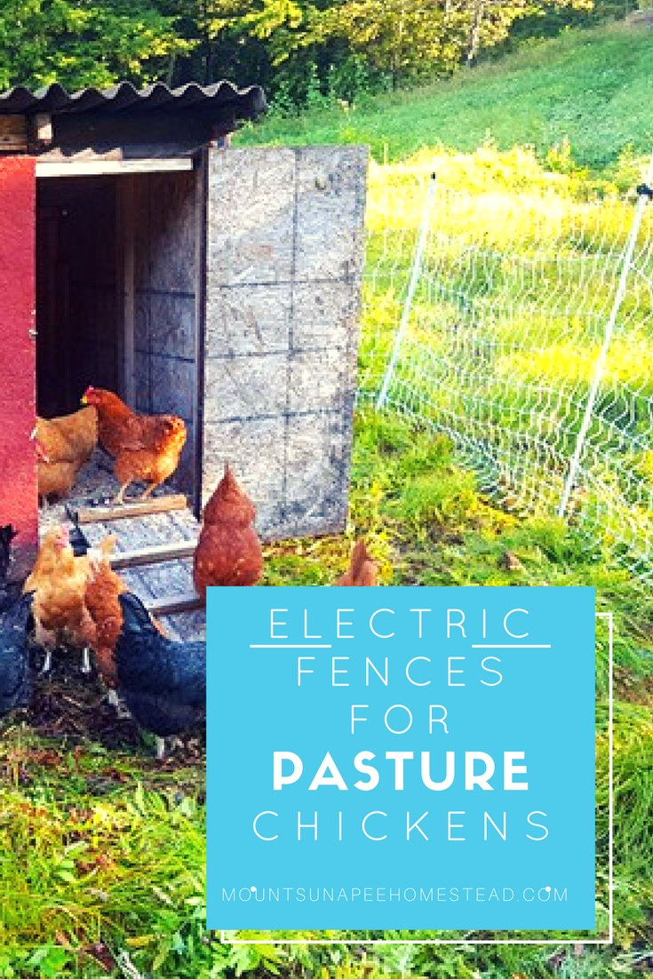 Electric Fences For Pasture Chickens