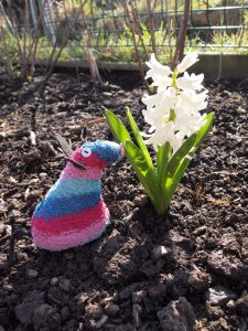 Ratvaark admires a flowering hyacinth in the ground