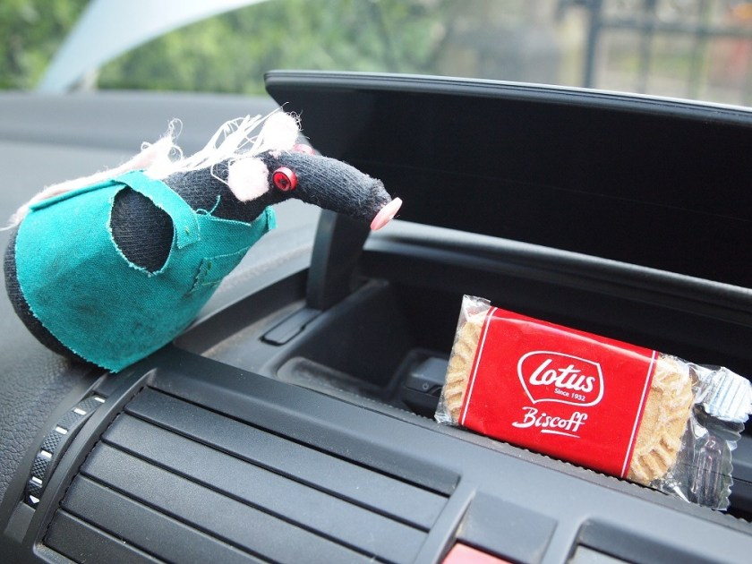 Fury looks at a storage hole in the dash, with a biscuit in it