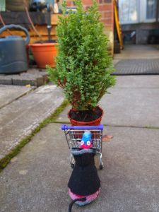 Ratvaark wheels the potted tree home in a supermarket trolley.