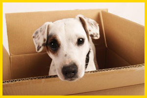 tips for moving a dog cross country