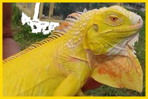 moving reptiles across country