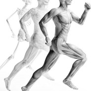 Endocrine Abnormalities Affecting the Musculoskeletal System