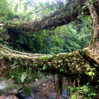 Nongriat-meghalaya-indie-india-inde-waterfall-root bridge-living root bridges