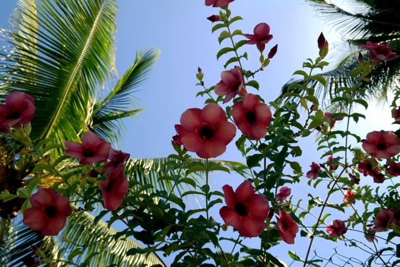 Move Our World Zipolite Oaxaca Mexico – Beach / Paradise / Naturism / Hippie