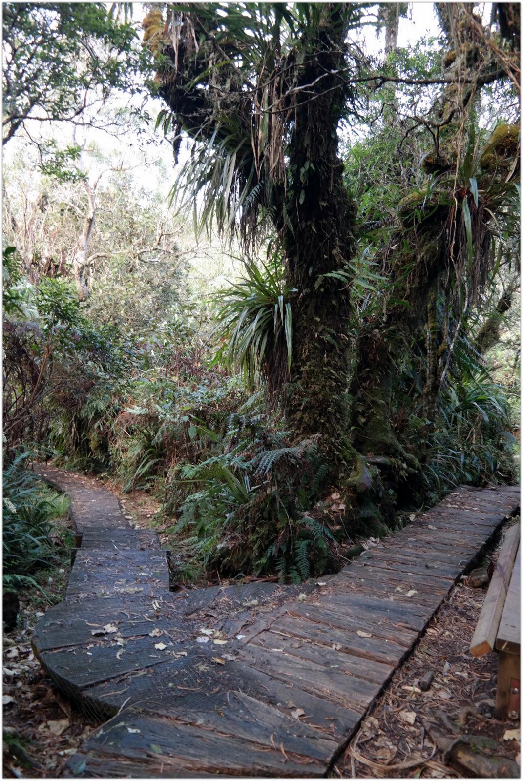 Move Our World Tourisme Responsable à la Réunion Sentier Bébour Randonnée