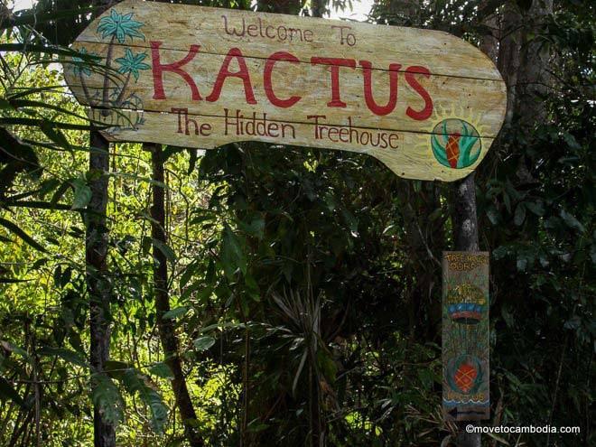 Kactus Koh Ta Kiev