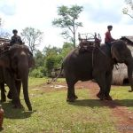 Mondulkiri elephants