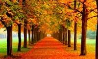 Los mejores fondos de pantalla del otoño para tu móvil