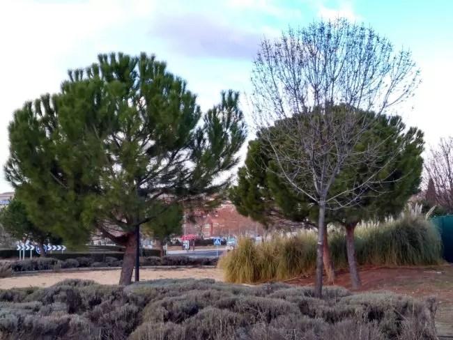 Foto de paisaje con el Motorla Moto G5S Plus