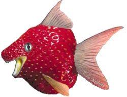 Pescefragola