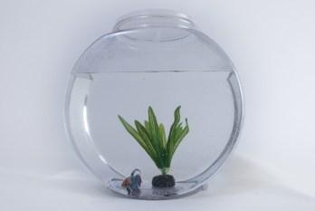 A fish bowl.