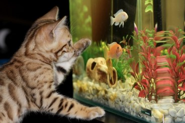 A cat and an aquarium.
