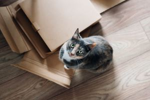 moving boxes and a cat