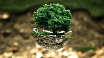 Small green tree