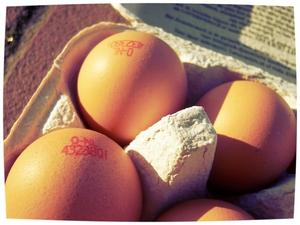 Nog leuker wordt het als de kruideniers de eieren van scharrelkippen her en der in de winkel gaan verstoppen. Toon Verhoeven