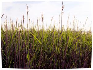 Het is vaak heerlijk rusten in het gras dat je ergens over hebt laten groeien. Cornelis Buddingh'