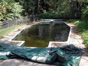 The pool algae was the. Mow Trim Blow Lawn Care And Maintenance Special Offers Great Lawn Care Prices Excellent Lawn Mowing Services We Mow Lawns Enjoy Lawn Care Savings With Lawn Link