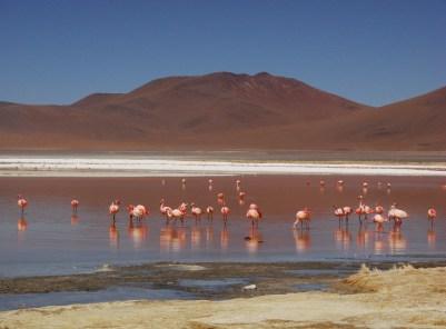 Chile Atacama flamingos